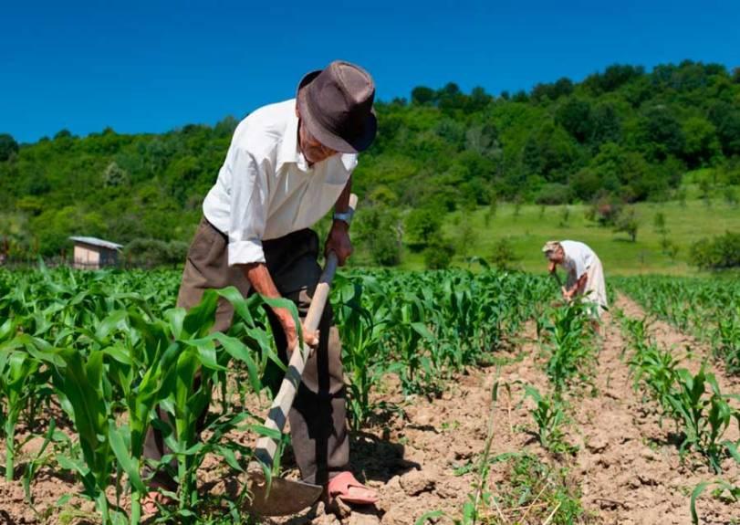 aposentadoria-rural-trabalhador.jpg